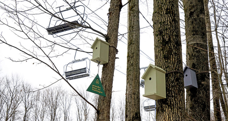 KnightsBridge Installed 100 Birdhouses in Bromont to Celebrate Nature and Their Upcoming Arborescence Project